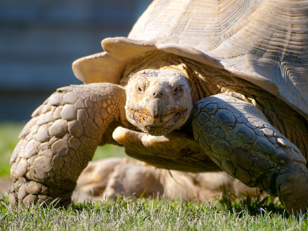tortoise Passive Investing Portfolio for the Win